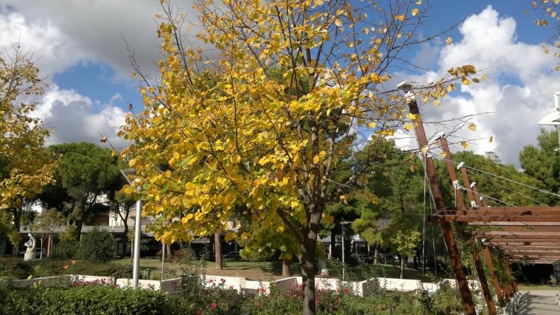 Villa comunale, autunno 2012