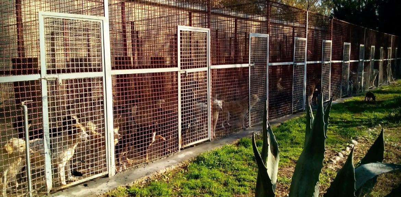Attivo il sito del canile comunale di san salvo - Portare il cane al canile ...