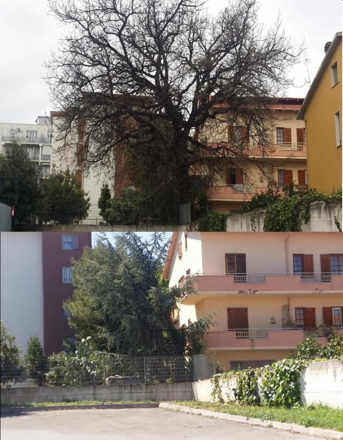 La quercia fotografata nel marzo 2015 e un'immagine odierna del sito dove sorgeva