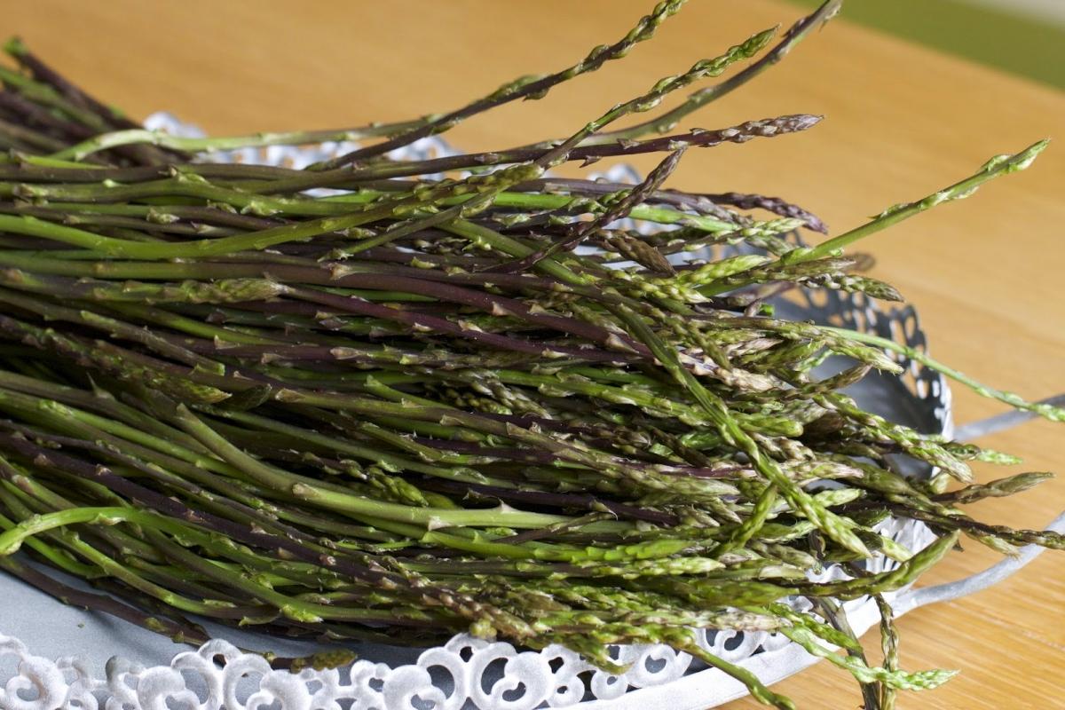 L erba pepe pianta aromatica molto usata nella cucina abruzzese